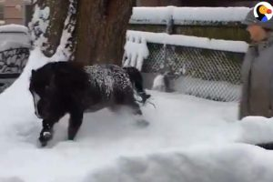 Mini-Horse-Has-The-Best-Snow-Day