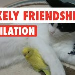 Unlikely Pet Friendships Video Compilation 2017