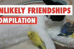Unlikely-Pet-Friendships-Video-Compilation-2017