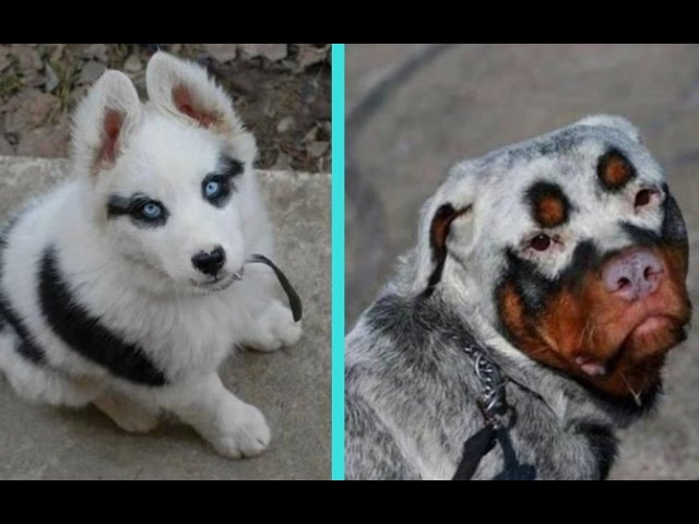 31 Unique Dogs With Unbelievable Fur Markings 1funny Com