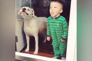 Dogs-Licking-Windows-Funny-and-Strange