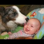 Dogs Meeting Babies For The First Time