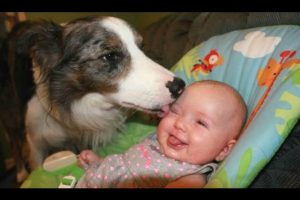Dogs-Meeting-Babies-For-The-First-Time-Compilation-2017-BEST-OF
