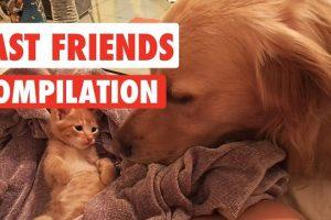 Fast-Friends-Pet-Videos-Compilation-2017