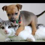 Funny Cats Meeting Cute Puppies for the First Time