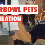 Funny Super Bowl Sunday Pets Video Compilation 2017