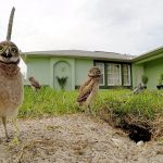 Owl Dance-Off