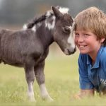 Most Beautiful Mini Horses in the World
