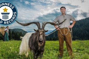 Largest-horn-span-on-a-goat-Guinness-World-Records