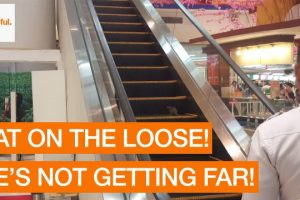 Runaway-Rat-Races-Up-Escalator-at-Shopping-Mall-Storyful-Crazy