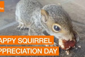 The-Slickest-Selection-of-Sensational-Squirrels