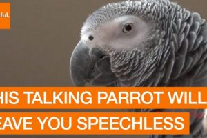 This-Talking-Parrot-Will-Leave-You-Speechless