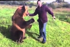 Very-Talented-Russian-Bear-and-His-Awesome-Friend