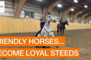 Young-Horse-Rider-Makes-a-New-Friend-Storyful-Animals