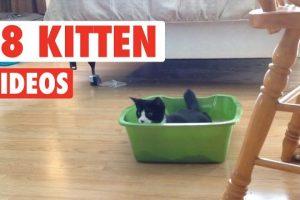 18-Funny-Kitten-Videos-Compilation-2017