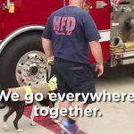 A Day in the Life of Jake the Firefighting Rescue Dog