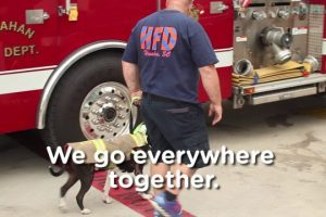 A-Day-In-The-Life-Of-Jake-The-Firefighting-Rescue-Dog