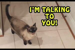 Cats-Talking-With-Their-Humans-Compilation-2017-NEW