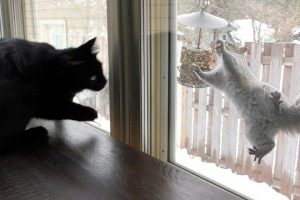 Cats-VS-Squirrels-Kitty-TV