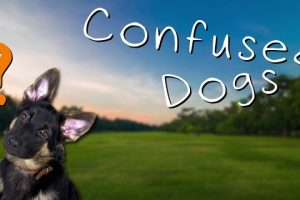 Confused-Dogs