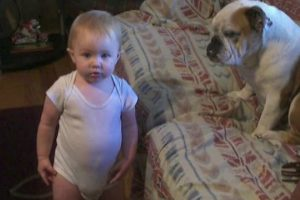 Dogs-Babies-Are-Best-Friends