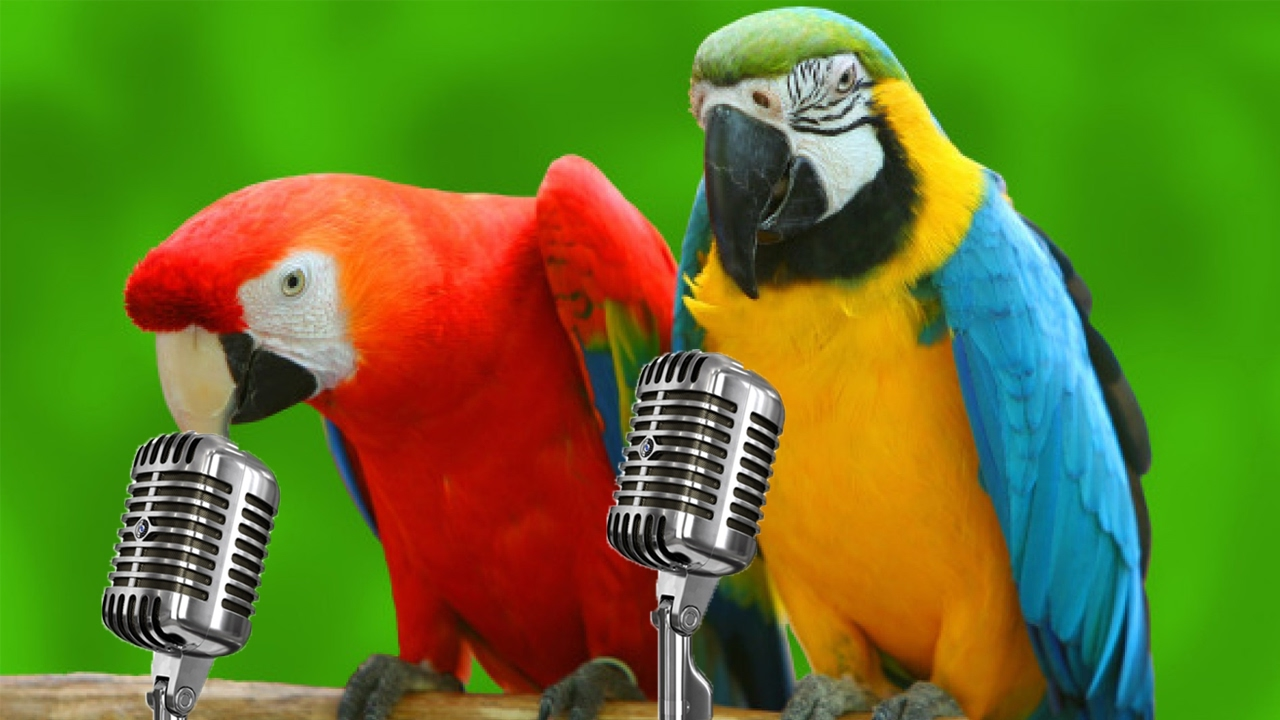 Funny Parrots Singing Compilation! – 1Funny.com