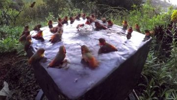 Hummingbird-Pool-Party-Number-Five