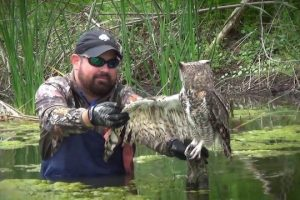 Man-Saves-Owl-Wrapped-In-Fishing-Line