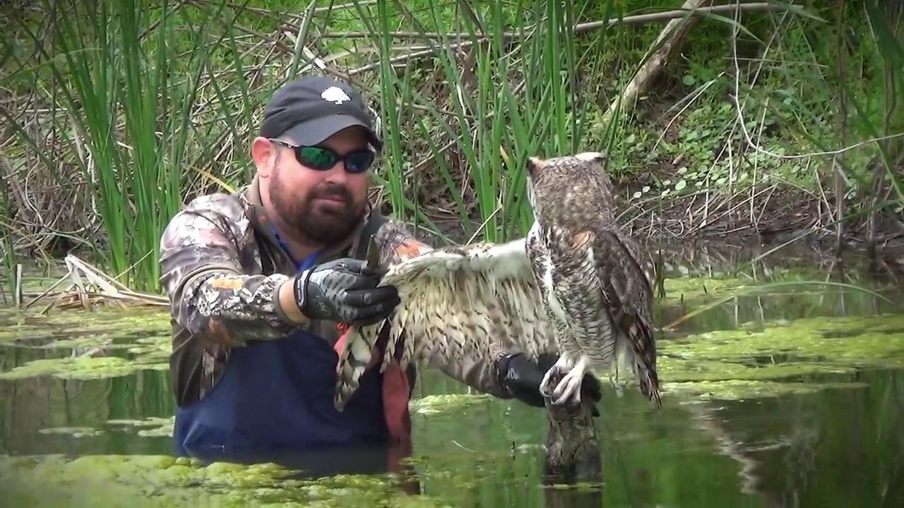 Man Saves Owl Wrapped ...