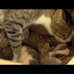 Squirrel Adopted by Cat Learns to Purr!