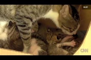 SQUIRREL-ADOPTED-BY-CAT-LEARNS-TO-PURR