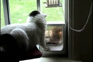 Squirrel-tries-to-get-in-cat-door-cat-says-no-Mary-Cummins-Animal-Advocates