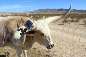 the-horn-cam