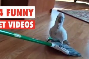 14-Funny-Pets-Awesome-Pet-Video-Compilation-2017