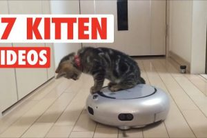17-Cute-Kitten-Videos-Compilation-2017
