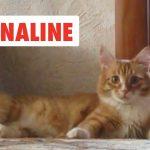Adrenaline Cats
