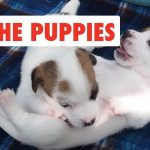 All The Puppies | Cute Dog Video Compilation