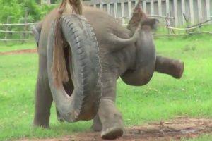 Baby-Elephant-Revenge-Of-The-Tire