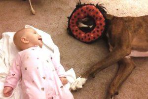 Boxers-Love-Babies-Compilation-CFS