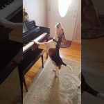 Beagle Plays the Piano and Sings