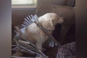 Cute-Dog-Gets-Stuck-S27