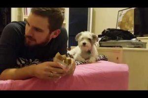 Dog-Secretly-Wants-A-Bite-S27