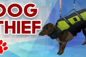 Dog-Thief-Dogs-Stealing-Food