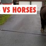Dogs Vs Horses | Funny Pet Video Compilation