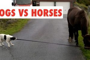 Dogs-Vs-Horses-Funny-Pet-Video-Compilation-2017
