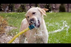 Funny-Dogs-Playing-With-Water-Compilation-CFS