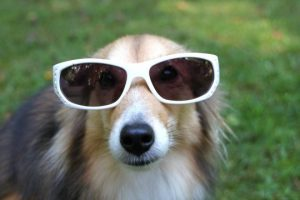 Funny-Dogs-Wearing-Sunglasses-Compilation-2017