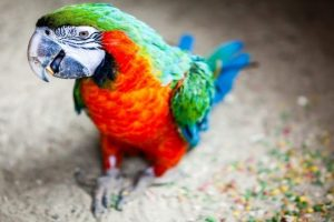 Funny-Parrots-Talking-Like-Humans-Seriously-Hilarious