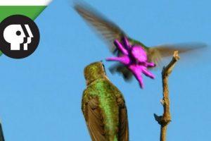 Hummingbirds-Face-Resembles-Baby-Octopus