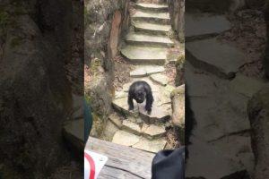 It-Got-Grandma-Chimp-at-Zoo-Throws-Poo-in-Grandmas-Face